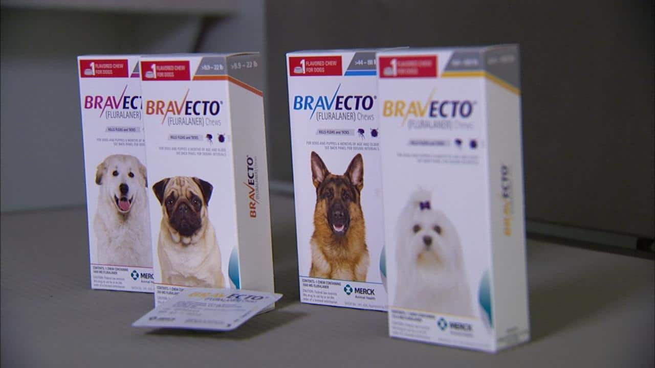Bravecto sizes: for the dog who wants to be smitten not bitten